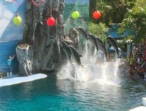 Safari_Dolphins